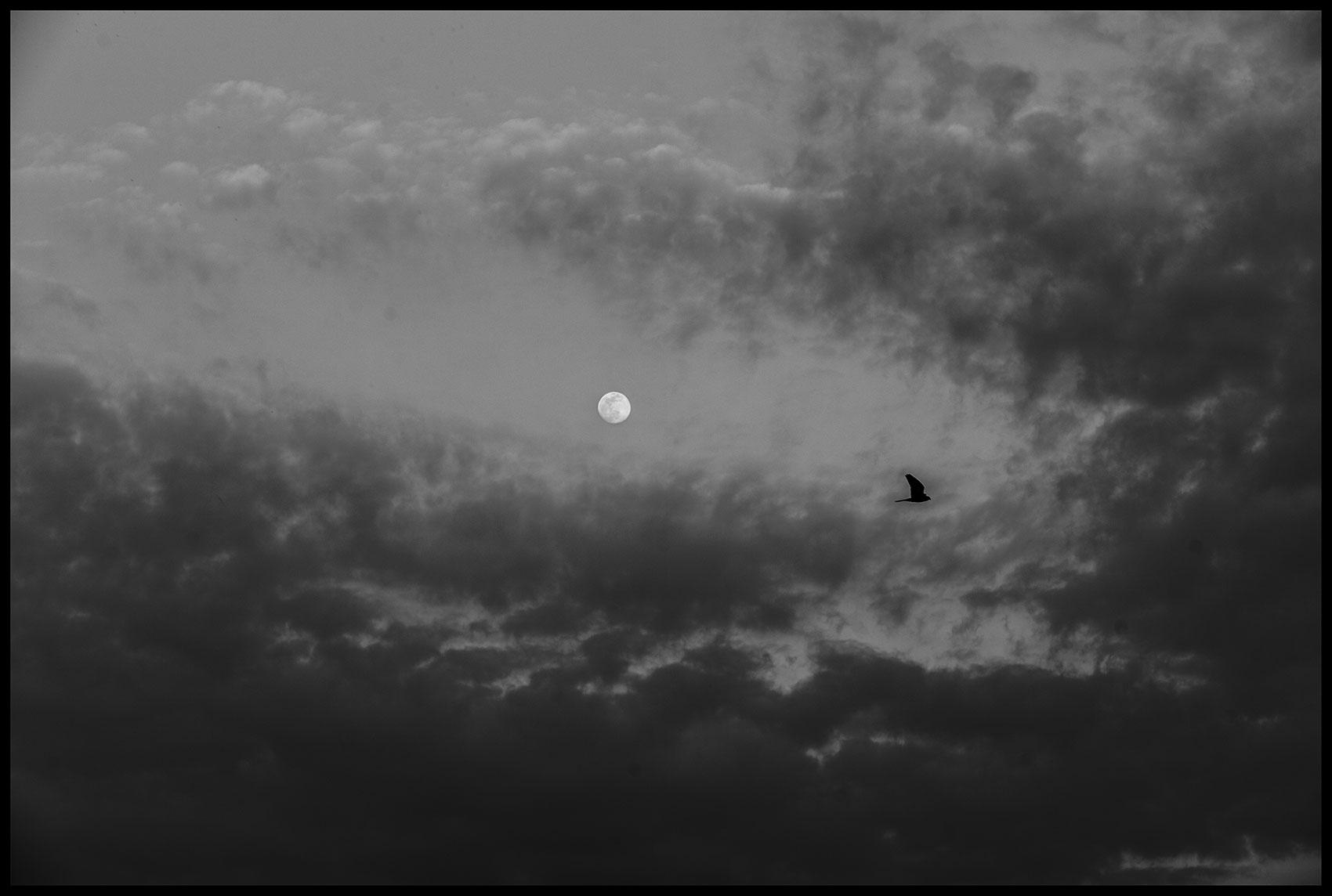 Yestarday's Moon 8/04/2020 | Album QUARANTINE | Stefano Paradiso - Photographer