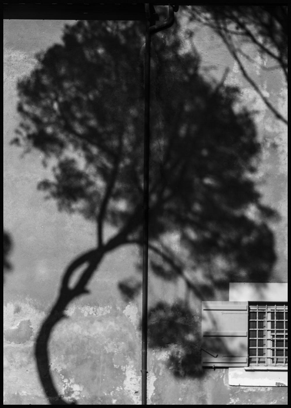 Above my Window | Album QUARANTINE | Stefano Paradiso - Photographer