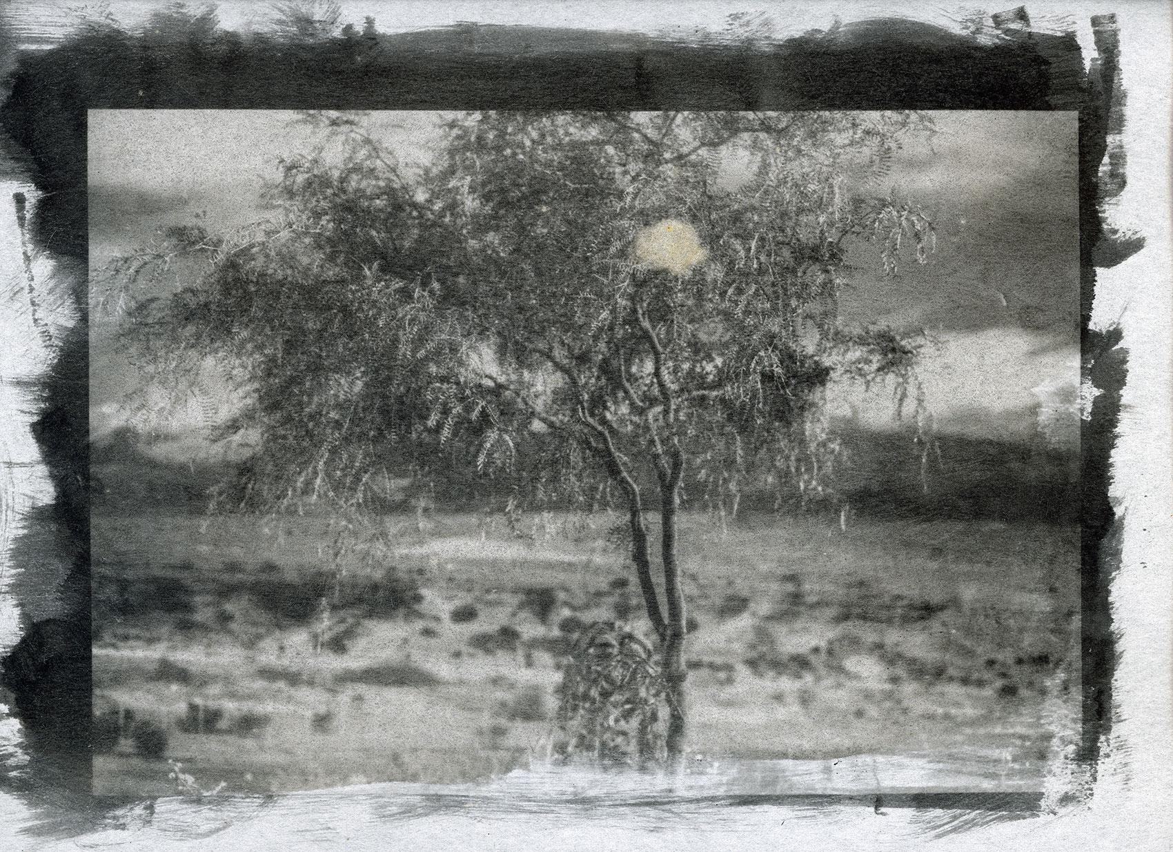 Window on the Desert 1 - Night Life| Stefano Paradiso - Photographer